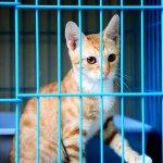 Kucing adalah salah satu hewan peliharaan yang bisa sangat menghibur dan jadi teman di kala sepi. Jika Anda ingin kucing kesayangan Anda lebih betah berada di kandang ketimbang di luar rumah, Anda bisa melengkapi kandangnya dengan berbagai ragam aksesori yang unik dan fungsional seperti rekomendasi BP-Guide berikut!