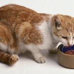 Jaga Kucing Anda agar Tetap Sehat dengan 10 Rekomendasi Makanan Kucing Berkualitas Ini