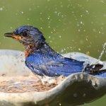 Rekomendasi Shampo Jati Jajar dan 5 Shampo Burung Lainnya agar Burung Semakin Sehat dan Bebas Kutu