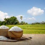Jenis-jenis makanan yang terbuat dari beras banyak ditemukan di berbagai daerah di Indonesia. Rasanya pun ada yang gurih, ada pula yang manis. Beberapa makanan olahan dari beras ini sering dijumpai dalam kehidupan sehari-hari. Salah satunya mungkin ada yang Anda sukai.