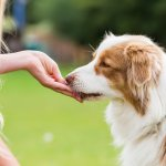 This article tells you all you need to know about amazing dog treats, and what you should consider before buying treats for your pet. We have recommended 10 dog treats that you can purchase online. Read on!