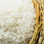 Beras merupakan makanan pokok rakyat Indonesia dan Indonesia pun adalah negara yang subur yang memiliki potensi yang tinggi dalam memproduksi beras. Akan tetapi, ada beberapa jenis beras yang masih senantiasa diimpor oleh pemerintah Indonesia. Apa saja itu? Mari simak artikel berikut ini!