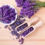 Aromaterapi lavender tidak hanya sedap untuk dicium wanginya. Lebih dari itu, lavender juga memberikan efek ketenangan diri yang memukau. Jadinya, wangi  lavender tentunya bisa menjadi pilihan jitu untuk memberikan keharuman yang memukau sepanjang hari, bukan?
