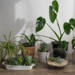 Your Guide to Indoor Plants: Keep Your Home Fresh and Pure with These Air Purifying Indoor Plants in 2020