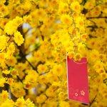 Top 10 cây hoa mai chơi Tết 2021 được ưa chuộng nhất