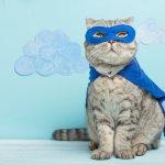 Tak hanya manusia, kucing bisa dipakaikan pakaian yang menggemaskan. Terbayang bagaimana lucunya. Nah, biar tidak salah pilih, Anda bisa melihat rekomendasi pakaian kucing yang sesuai dengan karakter hewan ini.