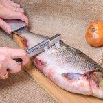 Membersihkan sisik ikan bisa sangat merepotkan dan membuat banyak orang malas mengolah ikan. Namun masalah itu bisa teratasi jika Anda menggunakan alat pembersih sisik ikan khusus. Dalam artikel ini, BP-Guide akan memberikan rekomendasi pembersih sisik ikan yang bisa Anda gunakan!