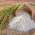 Setelah seumur hidup ini makan nasi terus, pernah kepikiran tidak sih mengapa mayoritas masyarakat Indonesia menjadikan nasi sebagai makanan pokoknya? Yuk, baca ulasan tim BP-Guide tentang beras-beras lokal yang jadi makanan wajib orang Indonesia.
