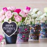 母の日には、人気のおしゃれで可愛い花の鉢植えをプレゼントしませんか。この記事では、定番のカーネーションや、注目のあじさい、個性的なクレマチスなどバラエティに富んだ商品をご紹介しています。また、吉本花城園のお得な特典がたくさんついた選べるカーネーションの鉢など、贈られて嬉しい商品も目白押しです。