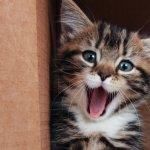 Pencinta kucing pasti ingin sesekali bereksperimen dengan kucingnya. Termasuk Anda, yang ingin memakaikannya kostum yang lucu-lucu. Langsung saja, kali ini BP-Guide merekomendasikan beberapa kostum yang lucu untuk kucing kesayangan Anda di rumah.
