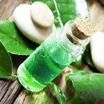 Green tea atau teh hijau adalah tanaman kaya khasiat yang sering diolah menjadi berbagai macam makanan juga minuman. Memiliki aroma yang menyegarkan, kini teh hijau juga digunakan sebagai aroma parfum favorit. Tertarik mencobanya? berikut rekomendasi parfum aroma teh hijau yang bisa Anda pilih.