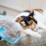 Hi, Cat Lover! Simak nih 8 Rekomendasi Pembersih Bulu Kucing dan Tips Membersihkan Bulu Kucing yang Bertebaran di Rumah