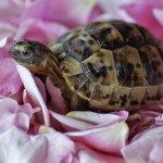 Ini 10 Rekomendasi Makanan yang Tepat untuk Menjaga Kesehatan Kura-kura Anda