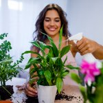 We all know we can't live without plants, but how many of us consider getting plants for our homes? There are a lot of benefits to it, being an air purifier one of the most significant ones. So, if you have been looking for plants for indoors, here are 5 options you can consider.