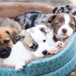 क्या आप अपने सबसे अच्छे दोस्त और साथ में पहरेदार के साथ खेलना पसंद करतें है। जी हाँ हम बात कर रहें है आपके पालतू कुत्ते की :यहाँ दुनिया में 10 सर्वश्रेष्ठ कुत्तों की नस्लों का वर्णन किया गया हैं।(2020)
