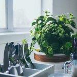 Menghias halaman rumah dengan aneka tanaman di dalam pot mungkin sudah Anda lakukan. Kini, cobalah untuk meletakkan beberapa pot tanaman di dalam rumah. Jika tanamannya juga bisa dikonsumsi, tentu akan membawa manfaat untuk Anda sekeluarga.