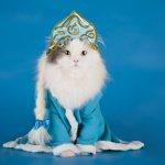 Sayang kucing Anda? Yuk, dandani dengan pakaian kucing yang lucu. Berikut ini, BP-Guide akan memberikan tips dan rekomendasi pakaian yang lucu dan unik untuk kucing peliharaan Anda, simak yah.