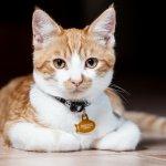 Punya kucing peliharaan memang menyenangkan. Kita pasti ingin mendadaninya supaya keren. Salah satu aksesori yang bisa kamu pilihkan untuk si manis adalah kalung, cek rekomendasi kami segera!