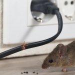 Tikus selalu membawa masalah. Tidak hanya membuat kotor lingkungan rumah, tetapi juga membawa berbagai penyakit. Masih bingung untuk mencari alat pengusir tikus? Berikut beberapa rekomendasi alat pengusir tikus yang terbaik dan efektif.