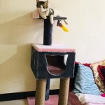 Finding the best cat trees usually means combing through reviews, determining the features that are the most important to both you and your furry friend and choosing a design for your space. At Chota Pakods, you'll find a wide selection of cat trees for your furry friend to enjoy. These cat trees give your kitty hours and hours of amusement and relaxation.