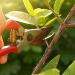 Lengkapi peralatan berkebun Anda supaya tanaman jadi lebih indah dipandang. Salah satu alat yang wajib dimiliki adalah gunting tanaman. Cek jenisnya bersama kami dan juga rekomendasi produknya!