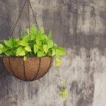 Meletakkan tanaman di rumah memberikan kesejukan dan menciptakan pemandangan yang indah. Tetapi kalau rumahmu kecil dan terasa sesak saat harus menambah pot di lantai, yuk gunakan alternatif ini. Menggantung pot di tembok akan menambah cantik dekorasi rumahmu! Nggak percaya? Simak rekomendasi BP-Guide berikut ini ya!