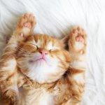 Kamu yang memiliki kucing kesayangan pasti akan melakukan apa pun agar si kucing tetap sehat dan aktif. Salah satu hal yang bisa dilakukan untuk merawat kucing adalah memberikan parfum pada tubuhnya. Nah, tanpa perlu lama-lama lagi, langsung cek aja rekomendasi parfum untuk kucing kesayanganmu, ya.