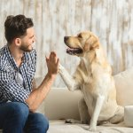 Here we have described all the reasons that make dogs the favourite pet of mankind. Apart from that, we have recommended some very thoughtful and amazing dog owner gifts that you can get for your friend who is a dog lover. Read on!