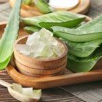 Mau Kulit Sehat dan Kenyal? Kamu Bisa Andalkan Pelembab Aloe Vera Ini! (2020)