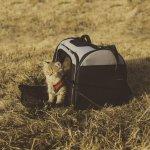 Sering Bawa Kucing Kesayangan Jalan-jalan? 10 Rekomendasi Tas Kucing Portabel Ini Wajib Kamu Miliki