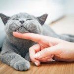 Sebagian besar dari Anda pasti senang memelihara kucing. Hewan kesayangan ini tentu harus dijaga kesehatan dan kebersihannya. Rawatlah dengan rekomendasi produk-produk perawatan kucing dari BP-Guide di bawah ini.