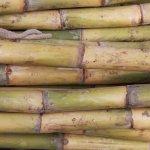 Anda baru memulai usaha menjual tusuk sate atau mungkin ingin usaha yang berkaitan dengan bambu lainnya seperti furnitur? Maka Anda wajib punya mesin pemotong bambu. Alat yang satu ini bikin usaha Anda jadi lebih cepat selesai dan lebih mudah. Cek rekomendasi dari kami, ya!