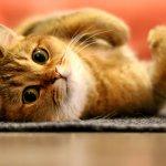 Kucing adalah hewan peliharaan yang digemari banyak orang. Segala bentuk perawatan dan makanan bagi kucing haruslah diperhatikan tak terkecuali mainannya. Iya, jangan sampai kucingmu merasa stres karena tidak bahagia. Yuk, ikuti ulasan BP-Guide tentang mainan kucing yang bisa kamu beli bahkan buat sendiri, lho!