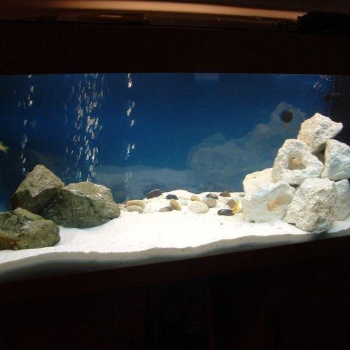 7100 Ide Gambar Desain Aquarium Sederhana Terbaik Yang Bisa Anda Tiru