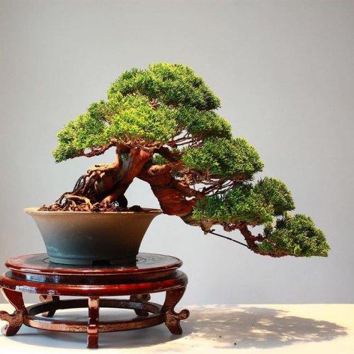 10 Rekomendasi Gaya Bonsai Paling Unik Dan Menarik Ini Cocok Dijadikan Dekorasi Untuk Mempercantik Rumah