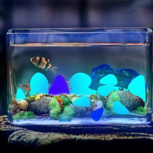 1000+ Gambar Aquarium Anak Tk  Gratis