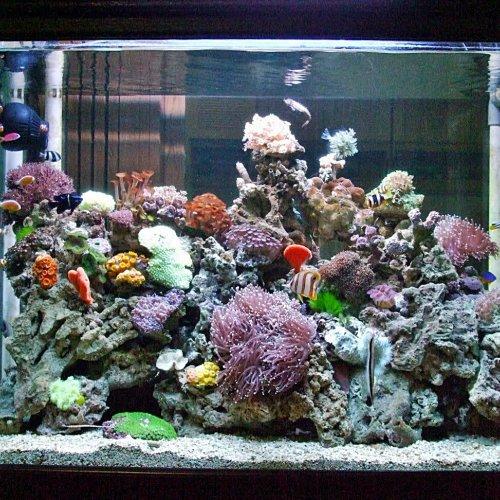 Yuk Buat Sendiri Akuarium Air Laut Dengan 10 Rekomendasi Peralatan Dan Dekorasi Akuarium Dari Bp Guide Berikut
