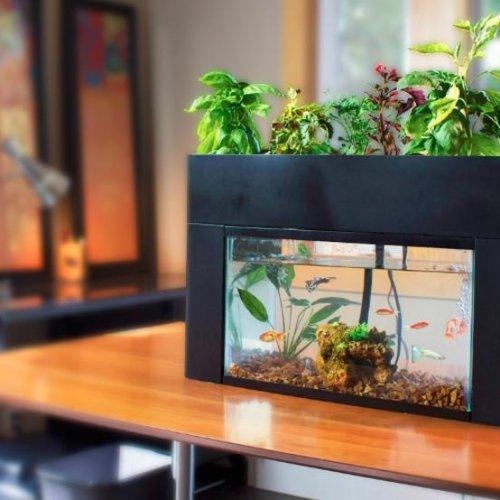 10 Rekomendasi Akuarium Mini Termurah Yang Mempercatik Ruangan Anda 2020