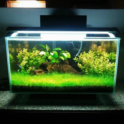95+ Foto Desain Hiasan Aquarium Sederhana HD Gratid Unduh Gratis