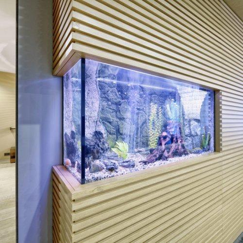 Punya Akuarium Di Rumah Ini Tips Memelihara Dan Memilih