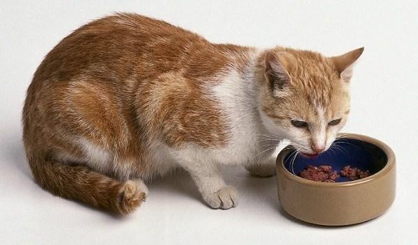 Jaga Kucing Anda Agar Tetap Sehat Dengan 10 Rekomendasi Makanan