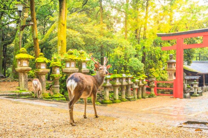 結婚記念日に泊まりたい奈良の温泉宿2021!おすすめのプランも厳選!