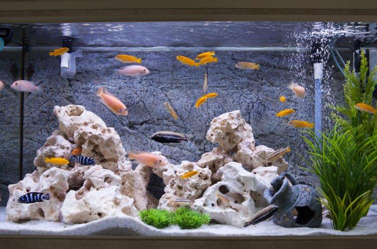 Ingin Menghias Akuarium? Ini 10 Rekomendasi Hiasan Akuarium Unik yang Ramah di Kantong!