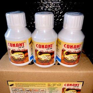 Conant Pembasmi Kecoa dan Rayap