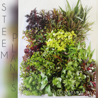 Paket Stem Plant Aquascape 20 Jenis