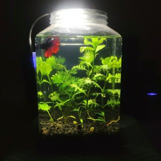 Mini Paket Aquascape 4L