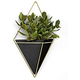 Triangle Plant Wall Frame