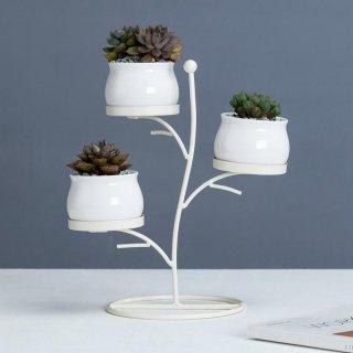 Rak Succulent Plants Frame Set