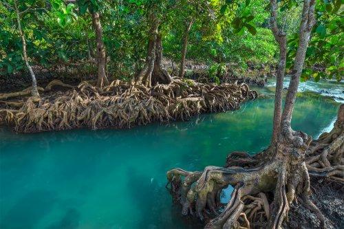 Mencoba Pengalaman Dan Tantangan Baru Dengan Berkunjung Ke Hutan Mangrove Beserta 10 Rekomendasi Hutan Mangrove Terbaik Indonesia
