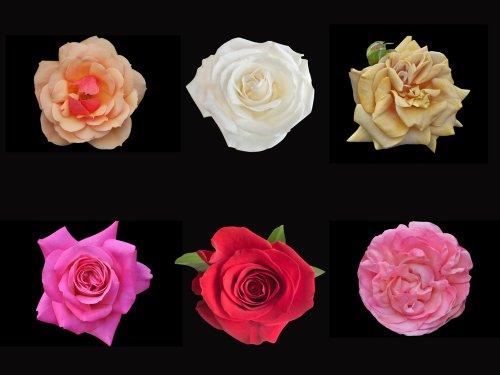 Gift Roses Because They Are Perfect For Any Occasion And 10 Types Of Rose Gifts You Can Order Online 2018